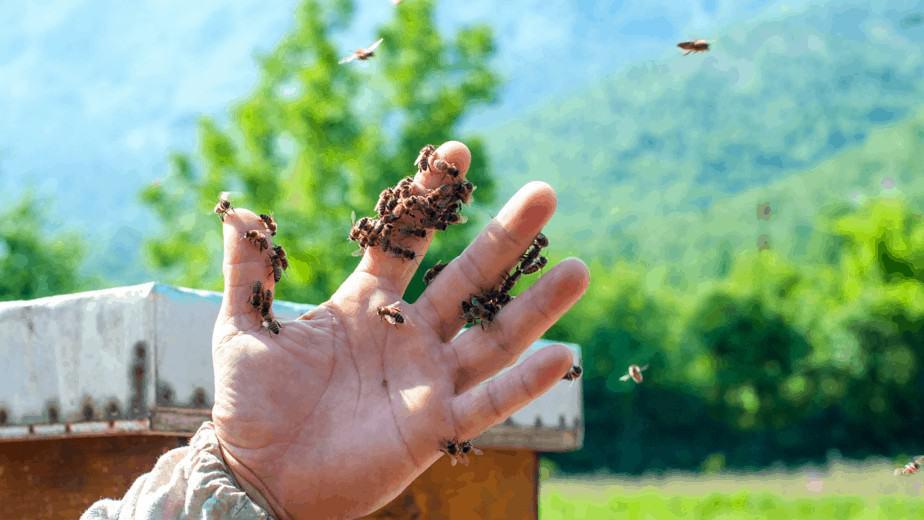 disminución de abejas