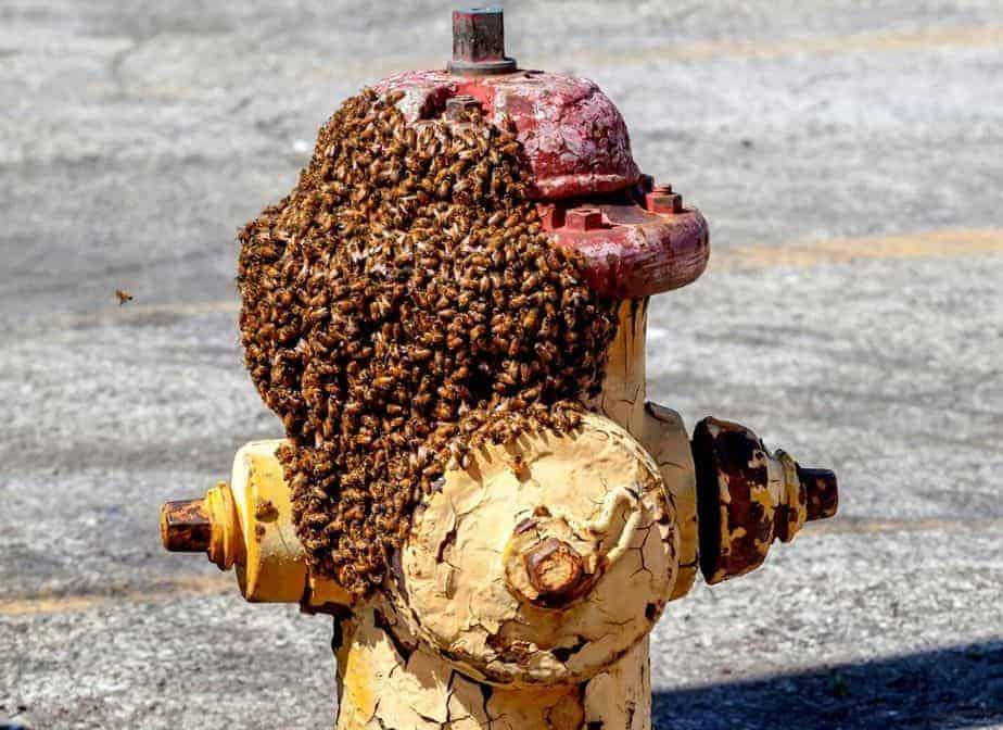 abejas en grifo de agua