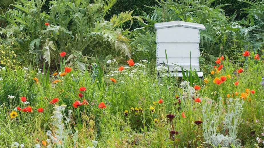 colmena en jardín florido
