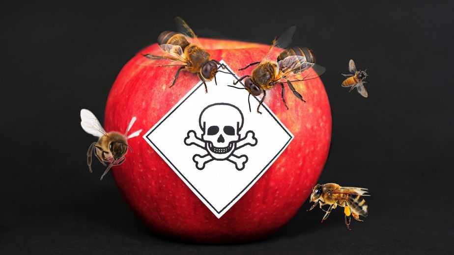 Manzana roja con letrero envenenada y abejas