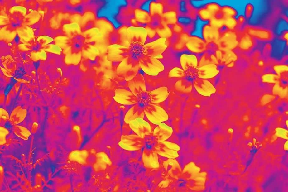 patrones térmicos en flores