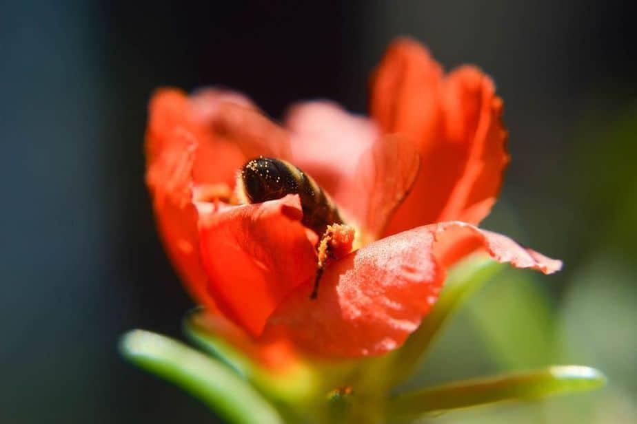 flor roja con abeja