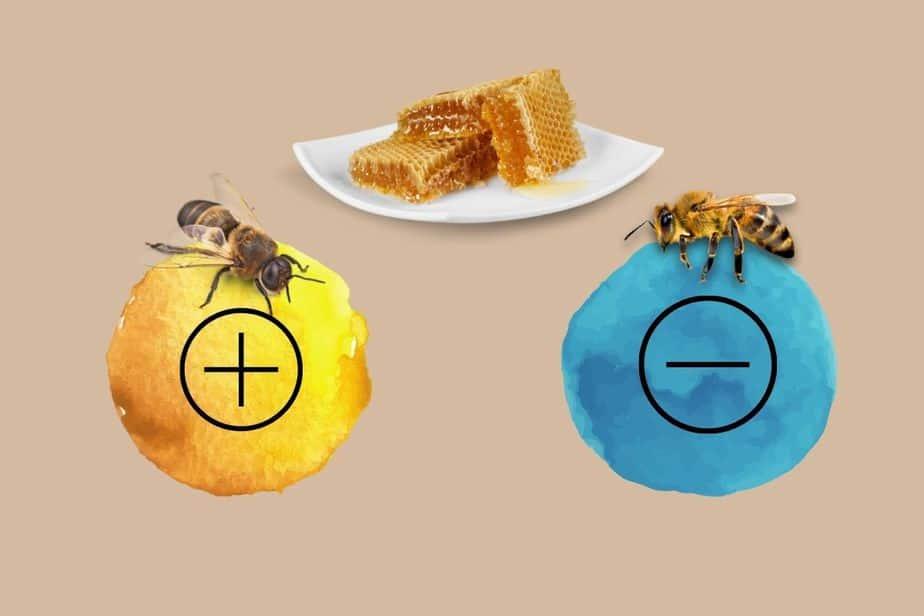 abejas y colores