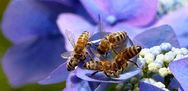 causas comunes de la muerte de las abejas