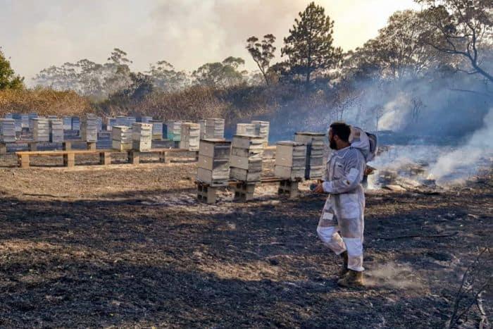 apicultores de Australia