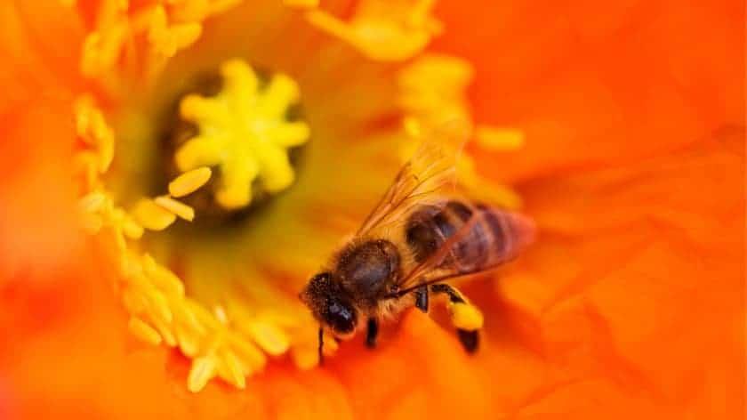 Polinizadores y néctar