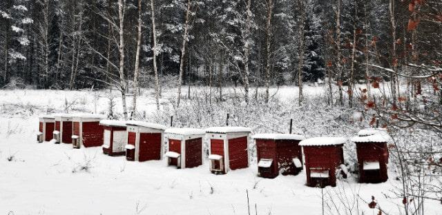 abejas de invierno