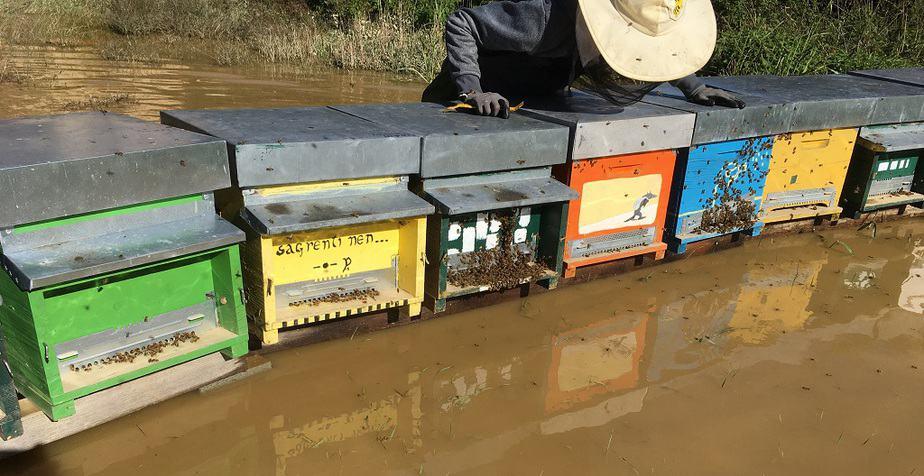 muerte de abejas por inundaciones