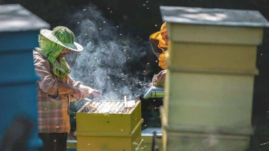 cursos online apicultura