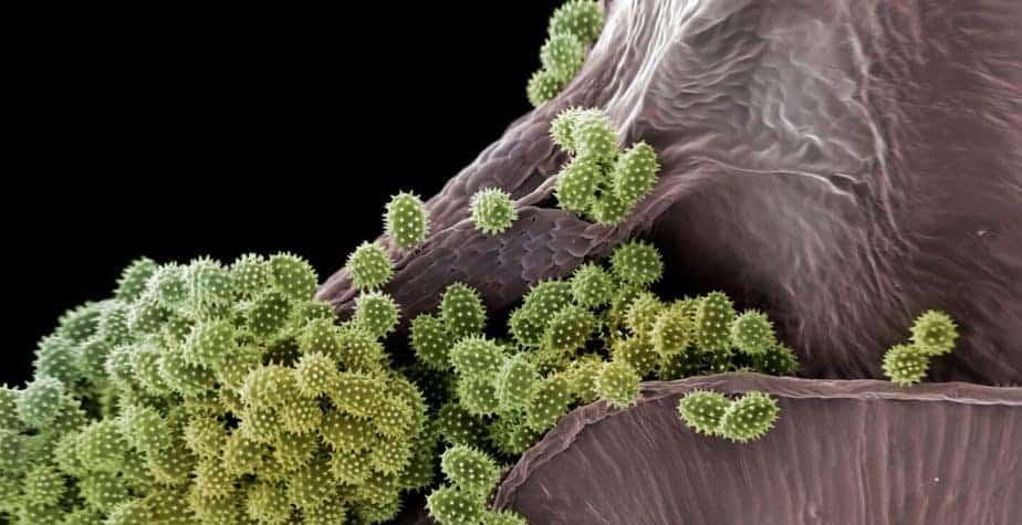 La belleza del polen
