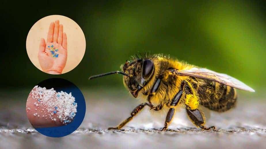 abejas sufren contaminación por plástico