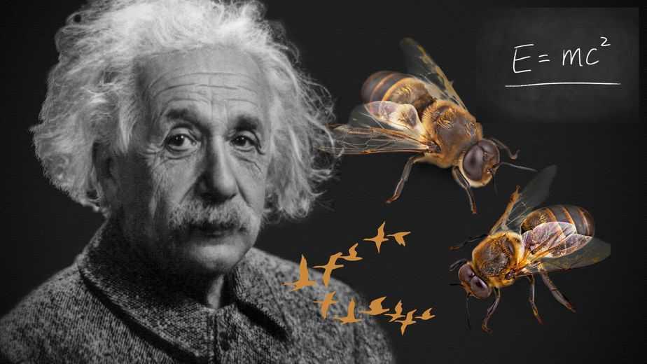 La teoría de Eistein sobre las abejas y los pájaros