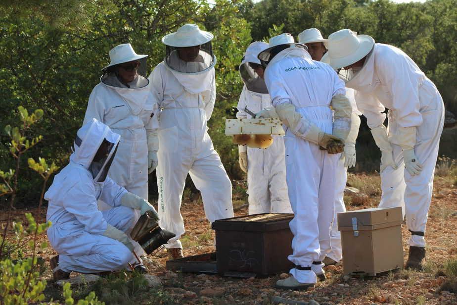 Ver a las abejas con los amigos