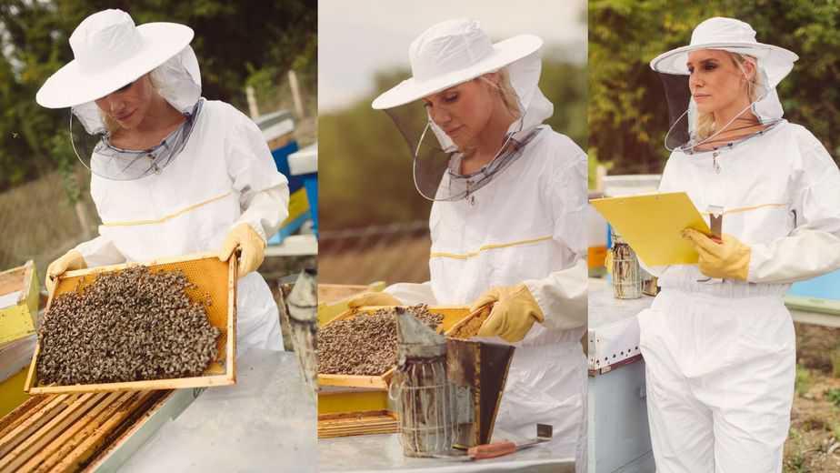 apicultora-observando-un-marco-de-abejas-en-el-colmenar- vestida-con-su-traje