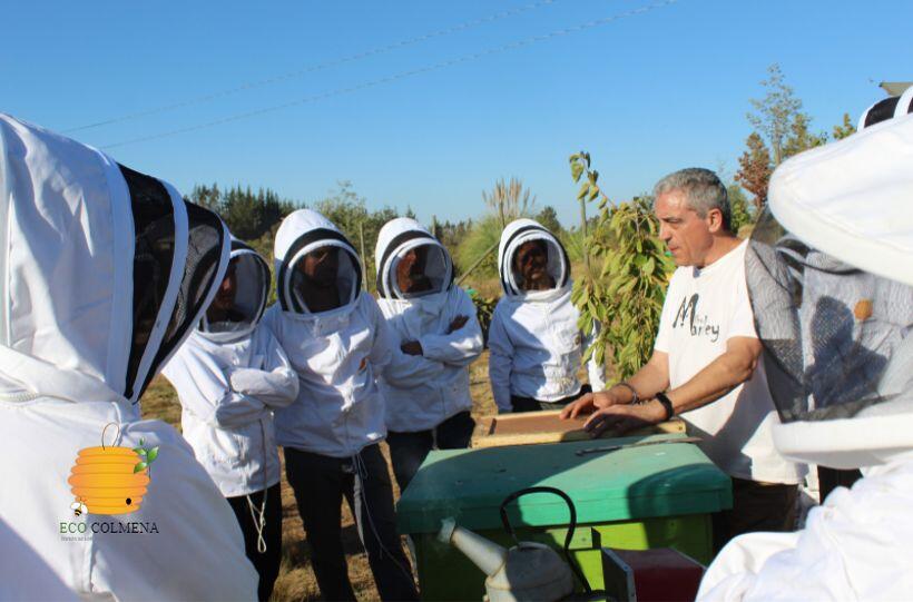 Curso de Apicultura intensivos y presenciales de Ecocolmena