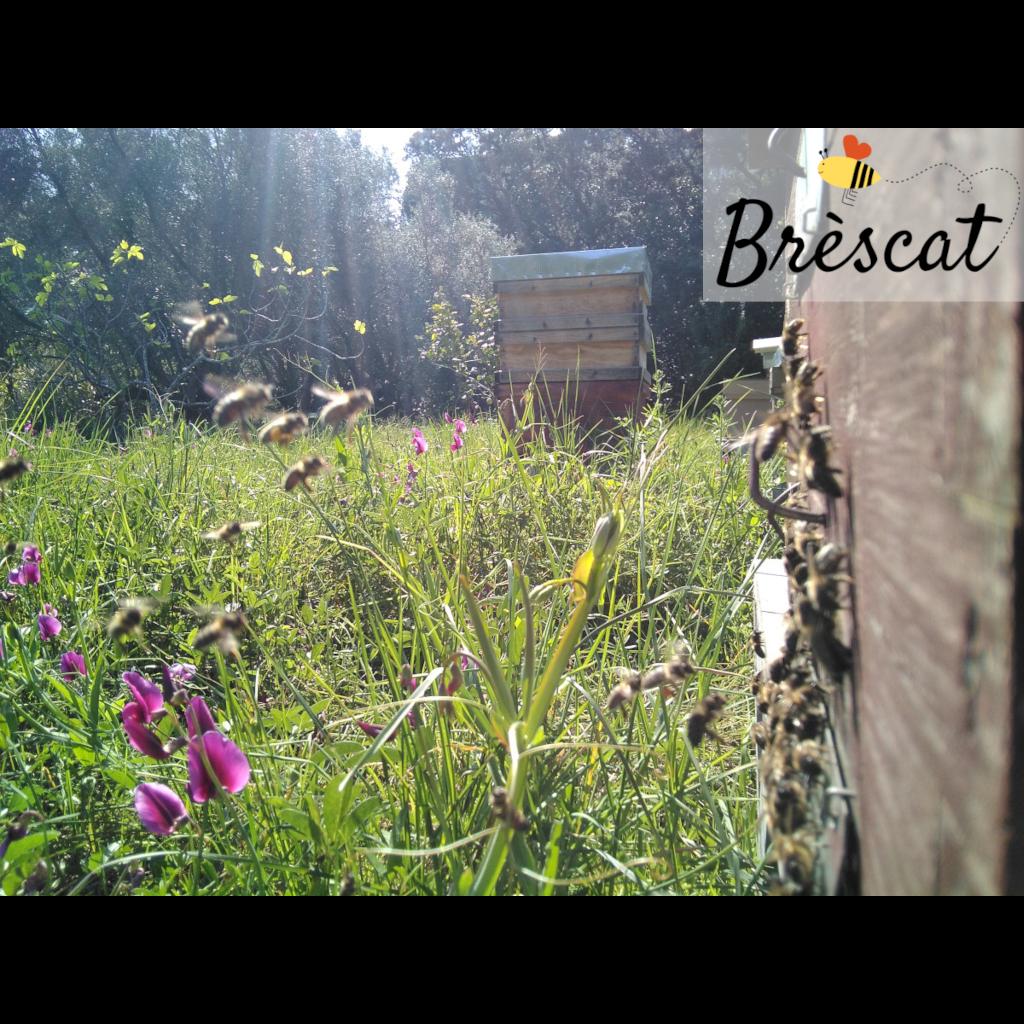Brèscat