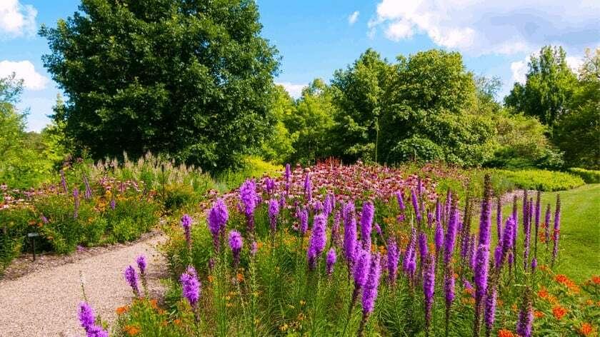 como percibe la abeja el ambiente del jardin