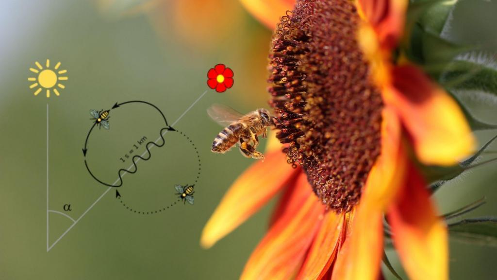 abeja y plano de posicionamiento